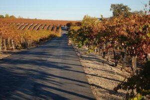 Pursue Your Passion, Dracaeana Wines