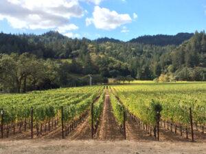 Ehlers Estate, Dracaena Wines
